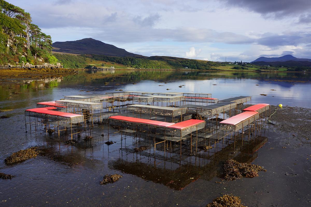 a tidal scene in scotland