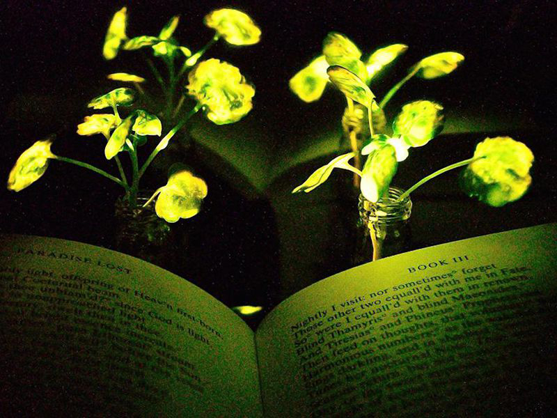 Two figurines in front of a green glowing plant